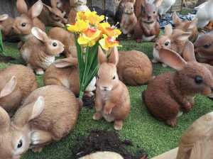They may be ornamental, but they are still damn cute! - Taken at Brigg Garden Centre