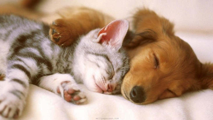 puppy_kitten_sleeping