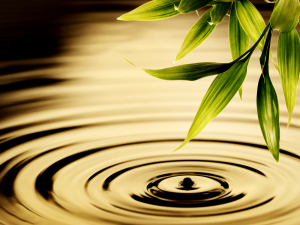 ripples_water_leaves